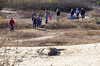 Año Nuevo Elephant Seal Hike 01/08/12 : Members and guests of the Dartmouth Alumni Association of Silicon Valley met at Año Nuevo State Reserve, located on Highway 1 between Santa Cruz and Half Moon Bay, for a naturalist-guided tour of one of the largest protected rookeries of Northern Elephant Seals. During a three-mile walk over rolling sand dunes elephant seals were seen in their natural habitat at the height of the birthing season.